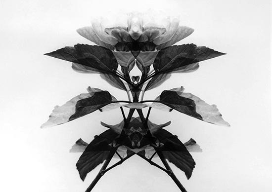 http://www.miraflores.gob.pe/Gestorw3b/files/img/9274-19402-tregua-de-vidrio-3.jpg