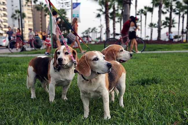 Feria de mascotas - febrero @ Parque Baden Powell